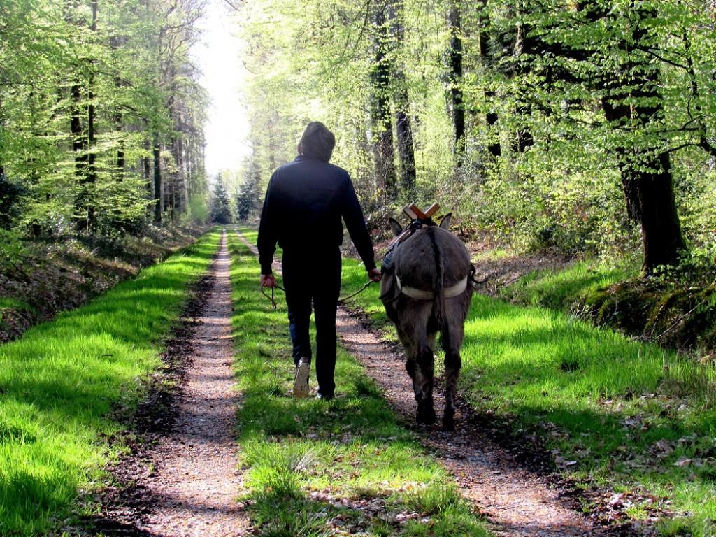 l'amoureux et son âne