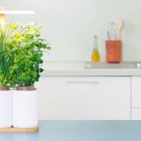 smart-lilo-potager-connecte only laurie
